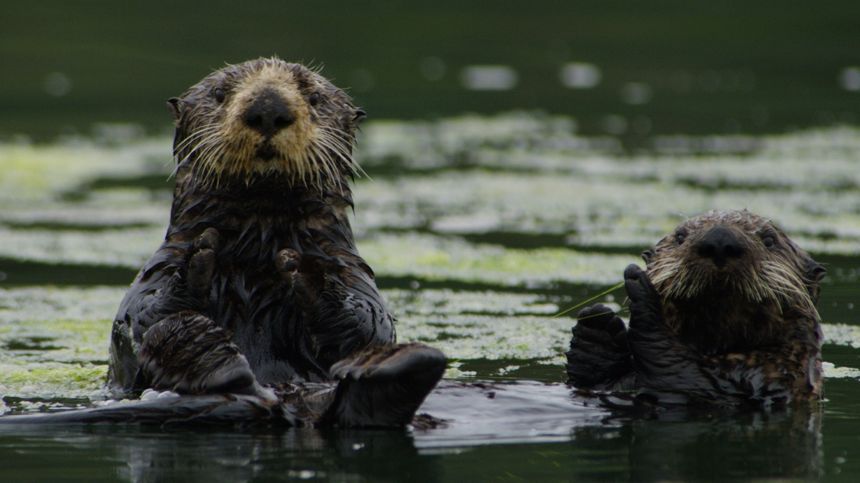 """Niezwykłe życie u zbiegu trzech rzek. """"Olśniewająca Ameryka"""" w lutym na kanale Nat Geo Wild."""