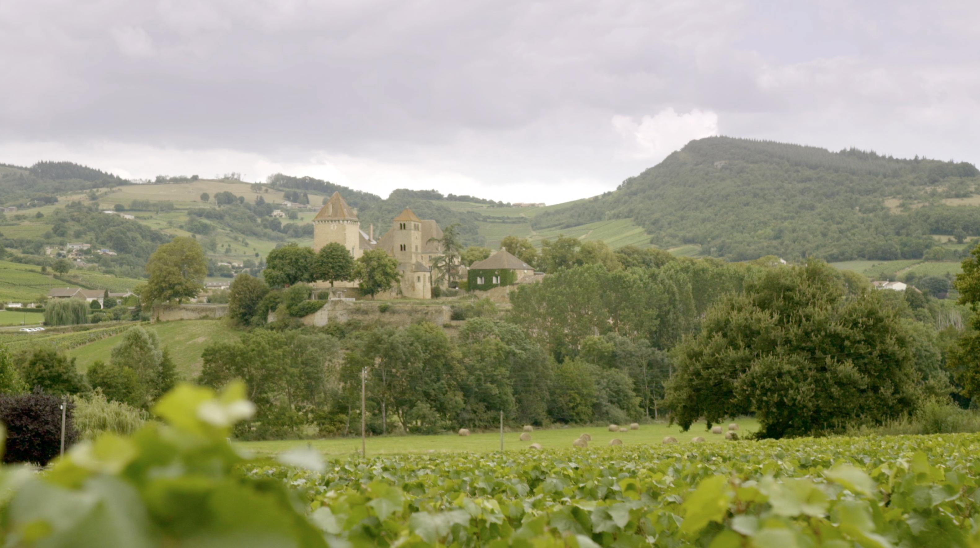 Na pomoc skarbowi narodowemu Francji − jak uratować cenne winorośle?
