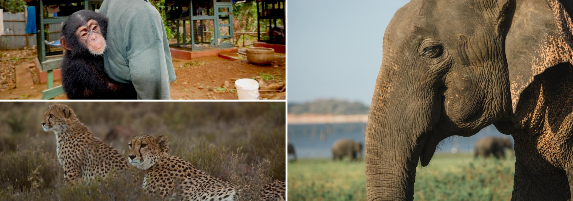 W Światowy Dzień Zwierząt kanał Nat Geo Wild zwraca uwagę na trudne relacje ludzi i innych istot