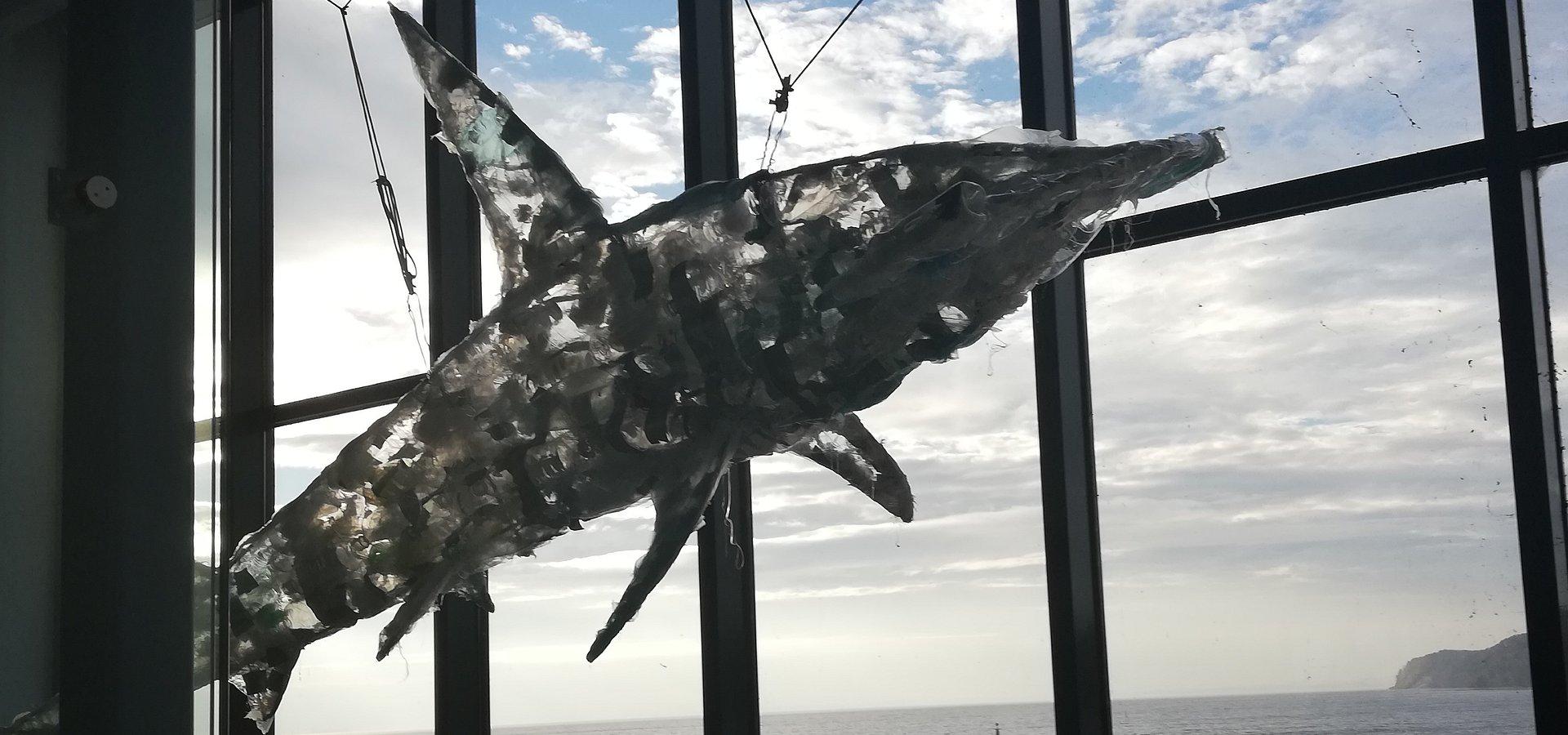 Planeta albo plastik? W Akwarium Gdyńskim na własne oczy możesz zobaczyć, jaki los czeka niewinne zwierzęta, jeśli nie zaczniemy działać