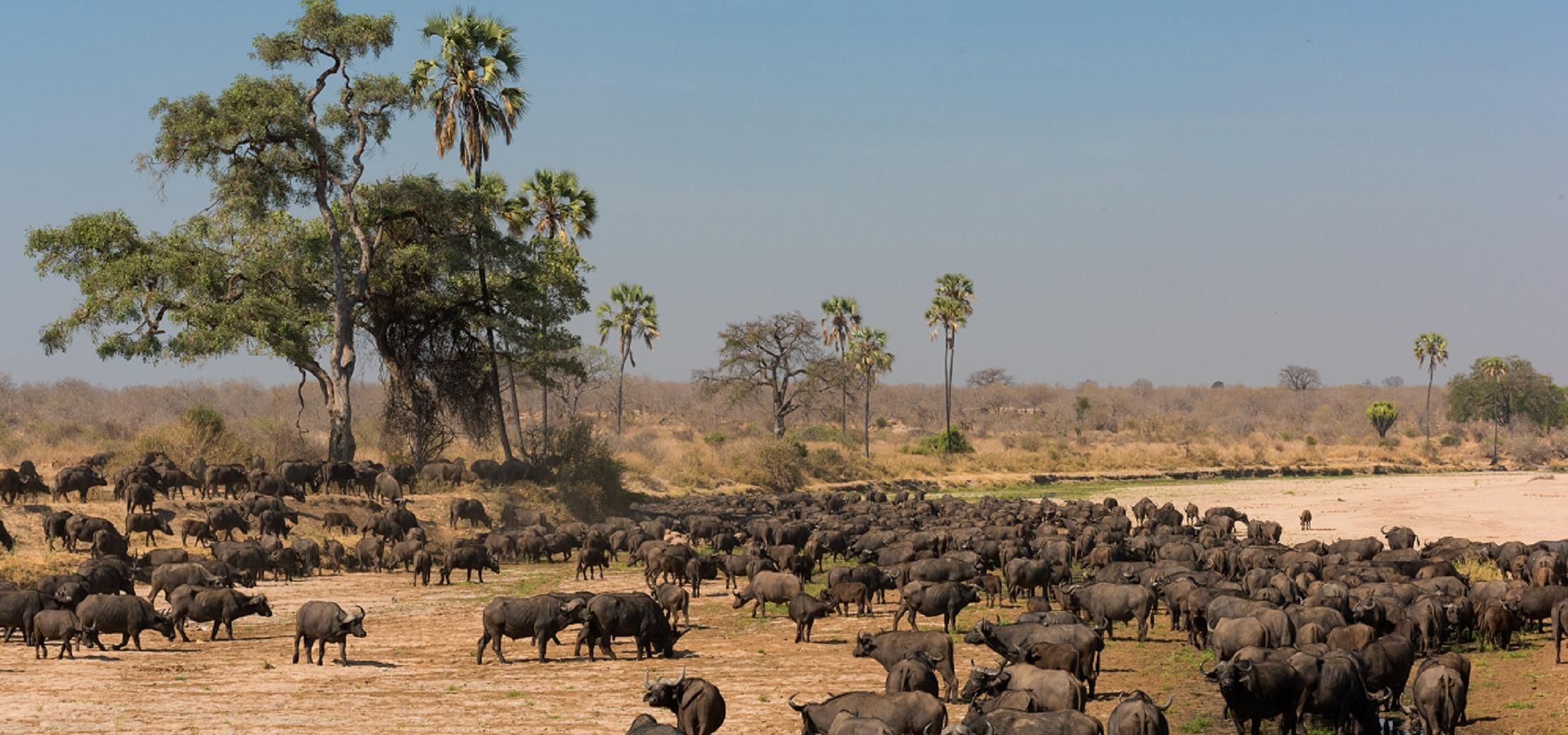 Afrykańskie królestwo zwierząt w całej okazałości w listopadzie na kanale Nat Geo Wild