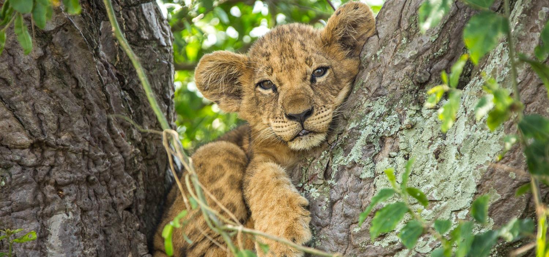 Luty na kanale Nat Geo Wild należy do kotów!
