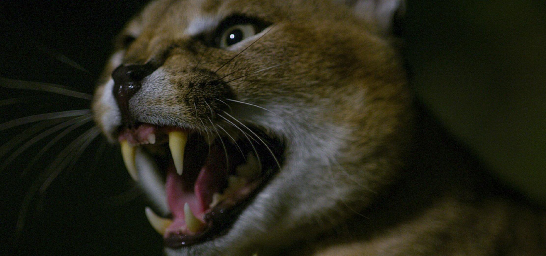 """Ciemność, cisza i… delikatny szelest – brzmi niegroźnie? """"Śmierć przychodzi po zmroku"""" to horror, jakiego nie widzieliście. Premiera w marcu na kanale National Geographic Wild"""