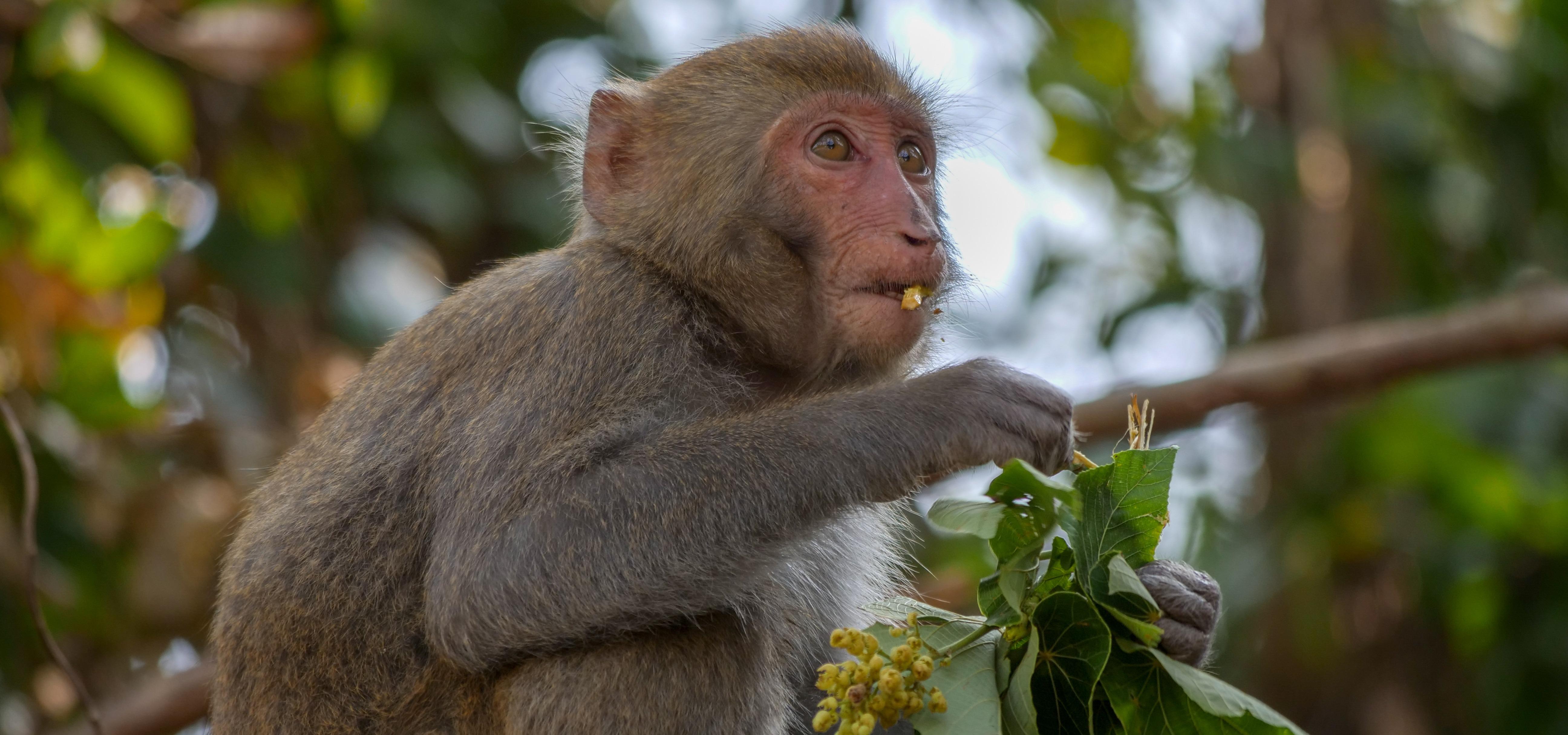 """""""Dziki Tajwan: nieznana wyspa"""" w marcu odkryje swoje uroki przed widzami kanału National Geographic Wild"""
