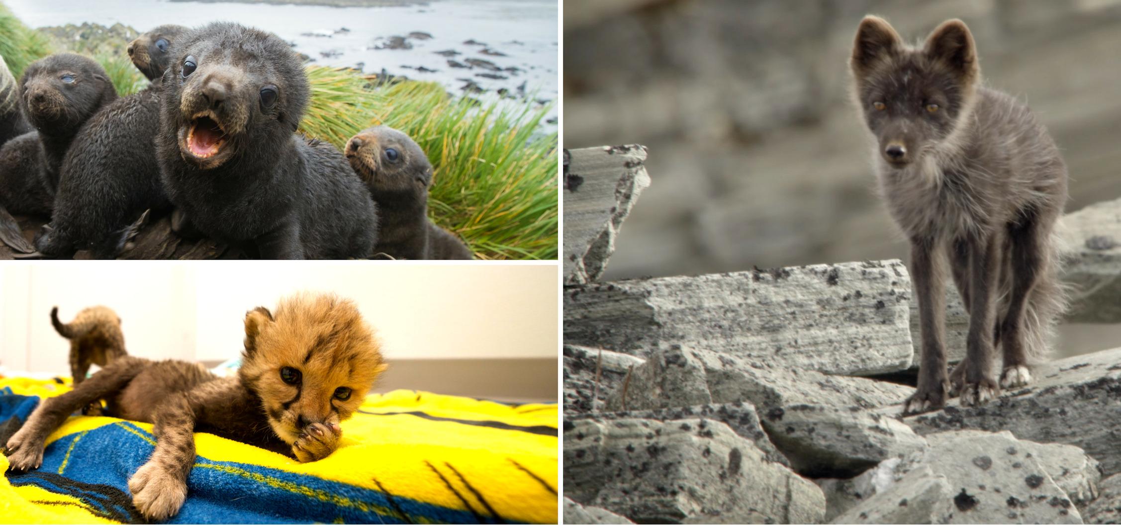 Propozycje programowe National Geographic Wild na kwiecień