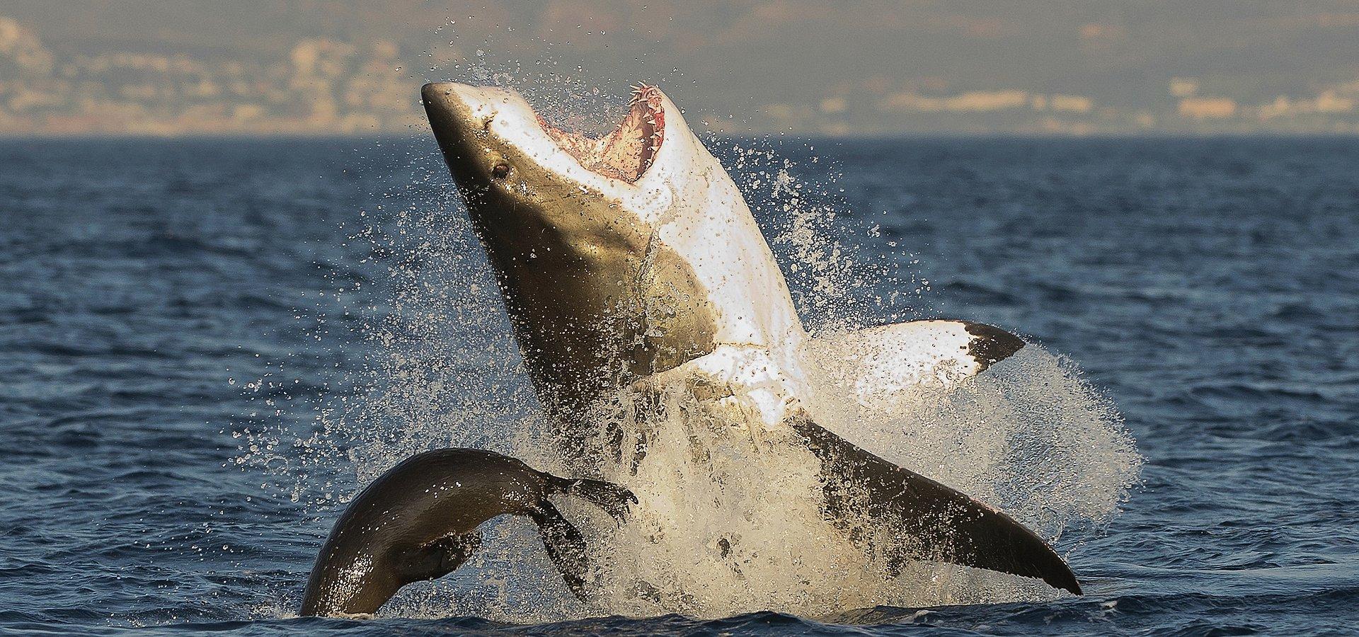 """Morski błękit zabarwi się na czerwono. Lipiec to """"Miesiąc z rekinami"""" na National Geographic Wild"""