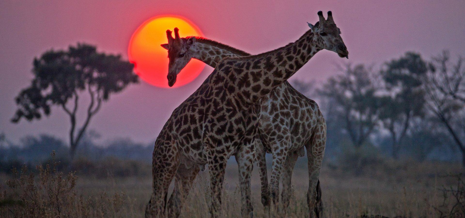 Okawango. National Geographic Wild zabiera widzów w podróż rzeką marzeń