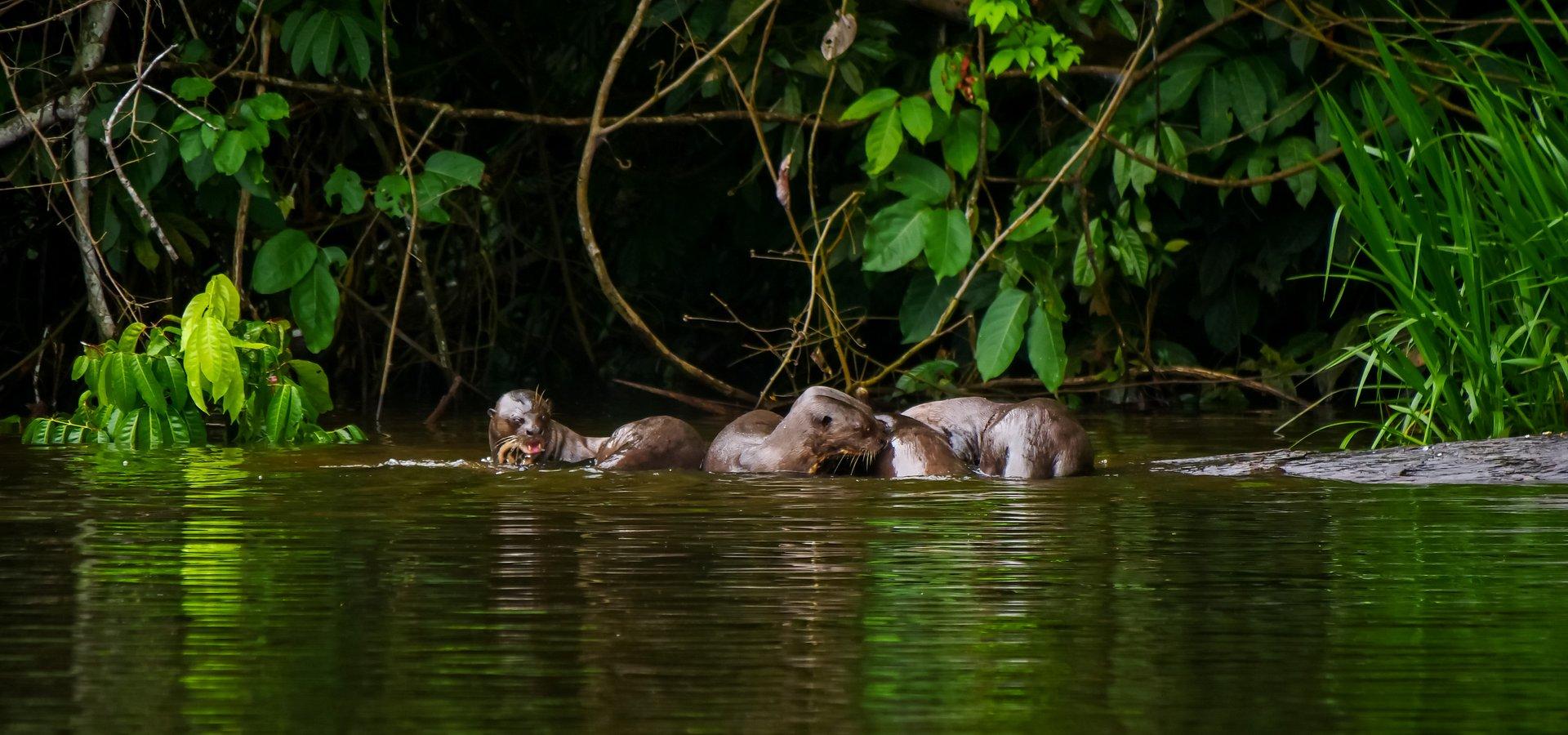 Amazonia jest w niebezpieczeństwie. National Geographic Wild oddaje jej hołd i skłania do refleksji