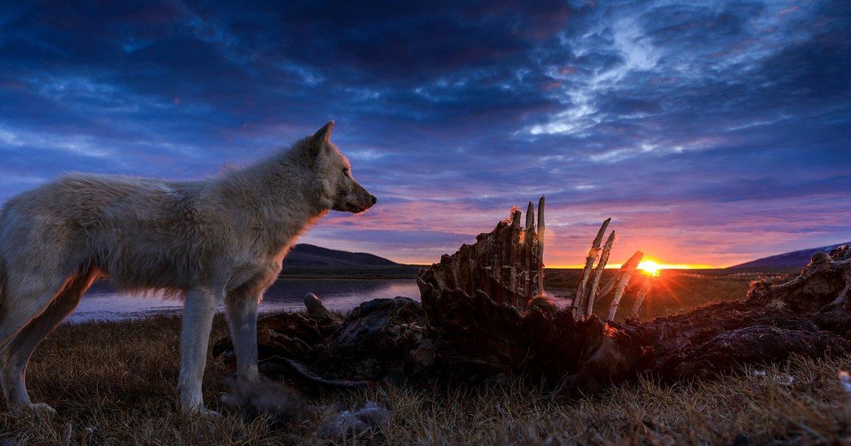 Grudzień na kanale National Geographic Wild