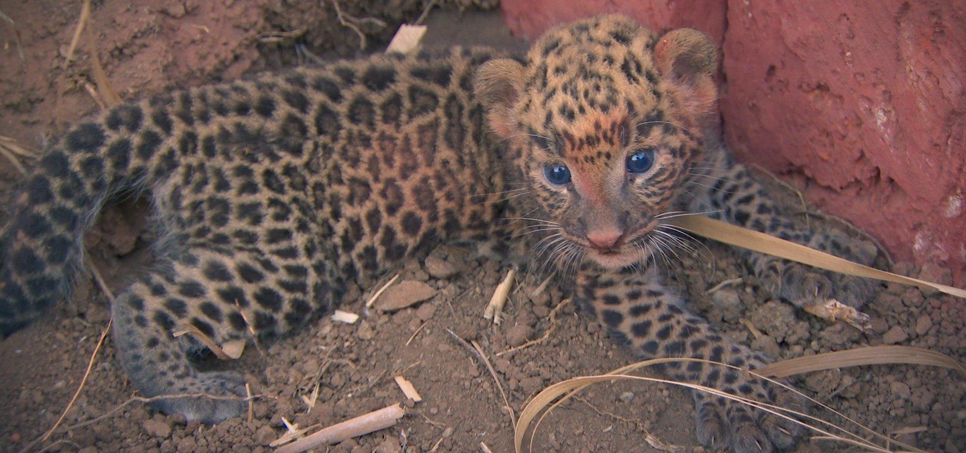 """W cichym konflikcie ludzi i zwierząt, niosą pomoc tym, którzy niczemu nie zawinili. """"Ratownicy z indyjskiej dżungli"""" na antenie National Geographic Wild"""