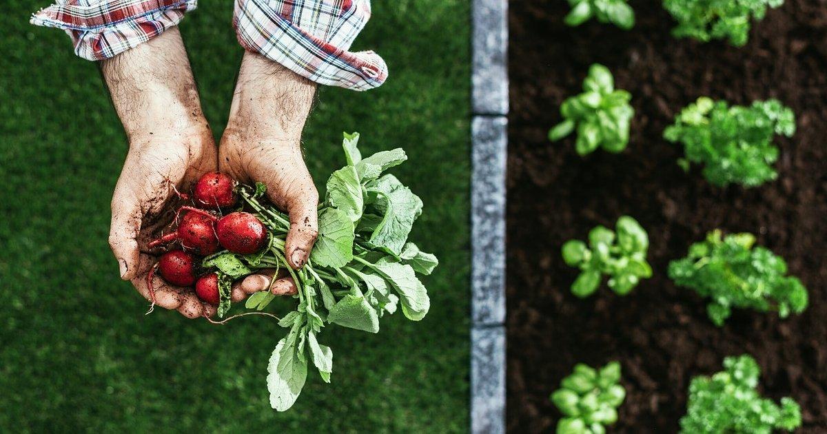 Komisja Europejska proponuje podatek zależny od wpływu na środowisko i przejście na bardziej roślinną dietę