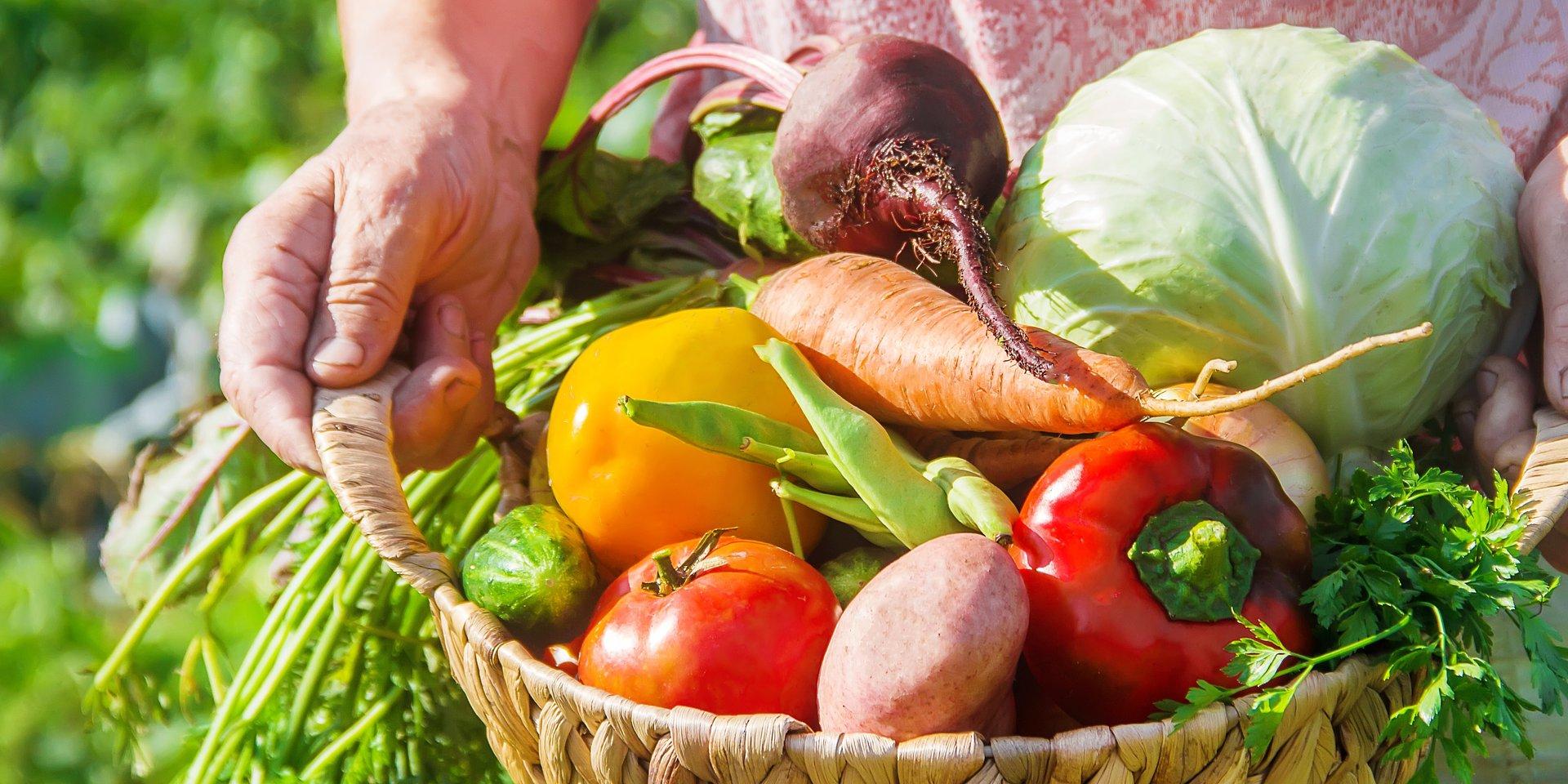 Produkcja żywności – zalecenia i wytyczne sanitarne