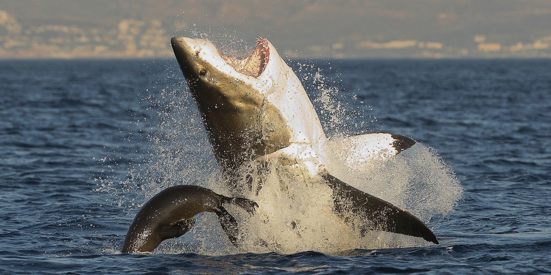 Żarłoczni władcy oceanów znowu w grze!