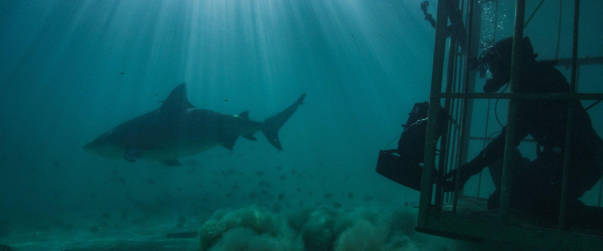 """O MÊS DE JULHO É DEDICADO AOS TUBARÕES COM O ESPECIAL """"SHARKFEST"""" NO NATIONAL GEOGRAPHIC WILD"""