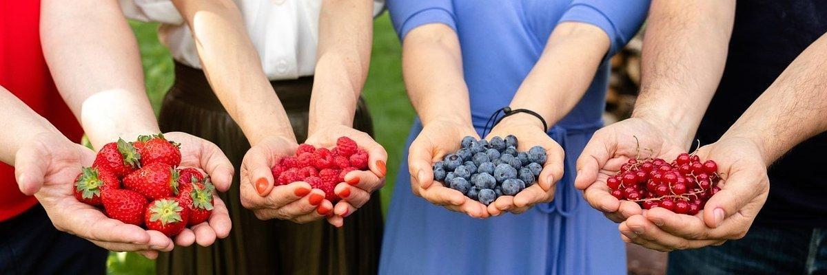 1 lipca - Dzień Owoców i Dzień Polskiej Borówki