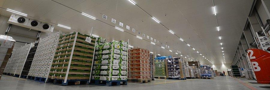 Jakie rozwiązania są przyszłością dla logistyki świeżych produktów?