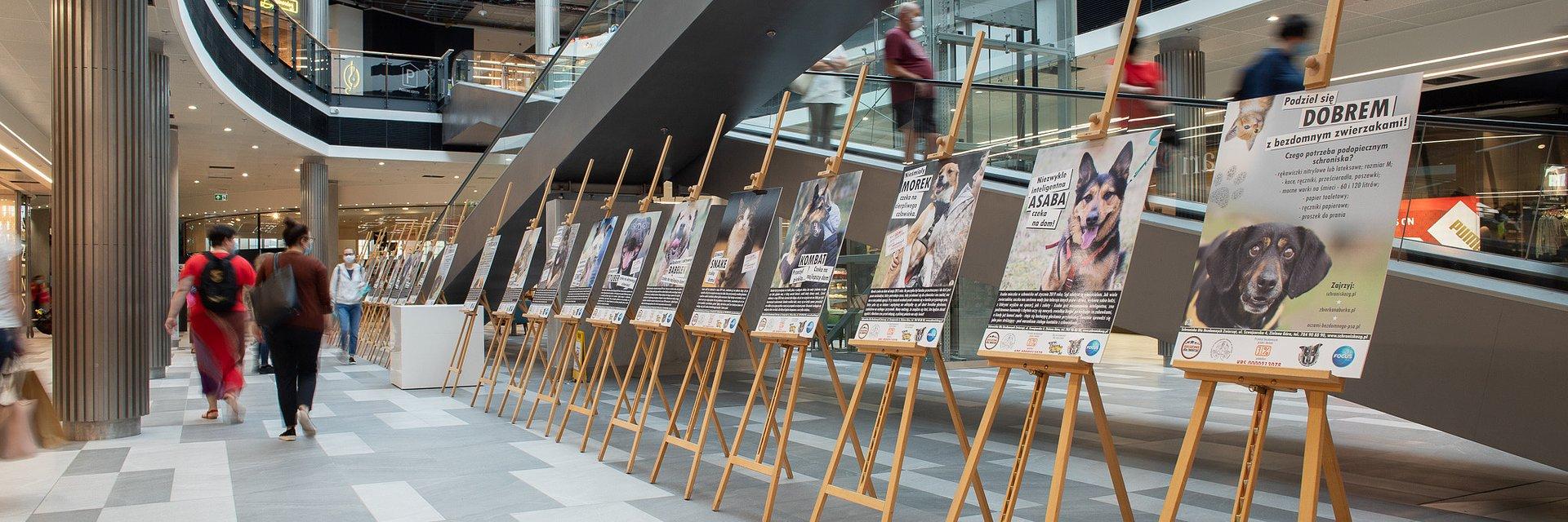 Wystawa fotografii Miejskiego Schroniska dla Bezdomnych Zwierząt w Focus Mall