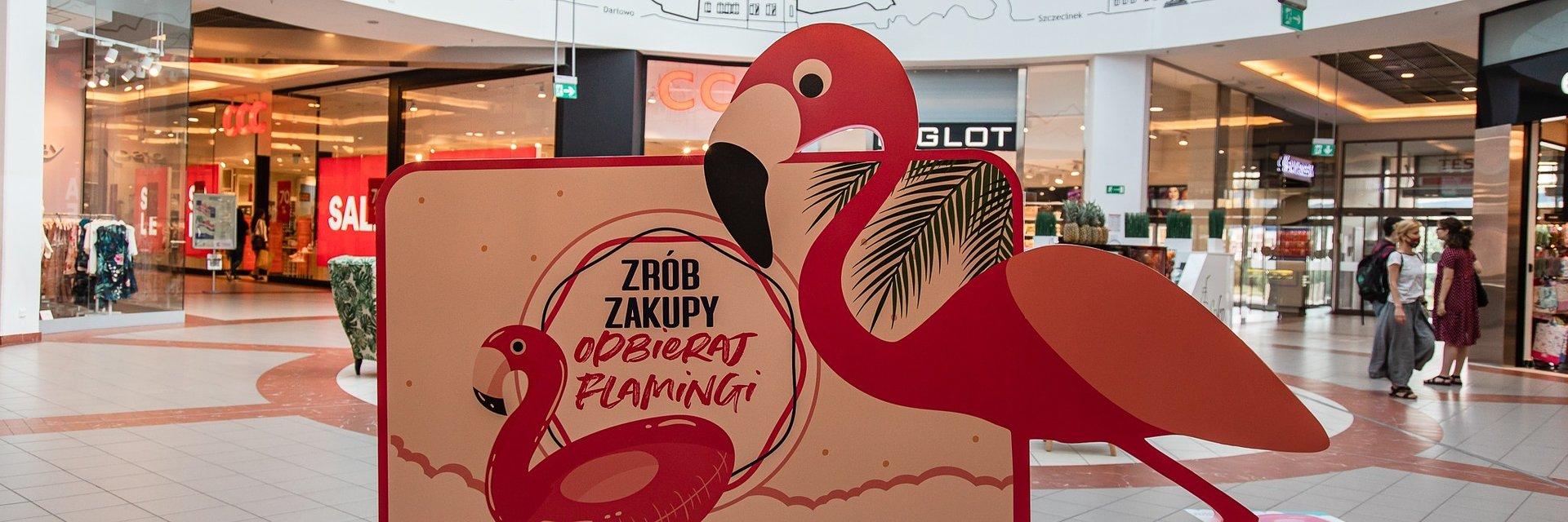Róż, flamingi i nagrody, czyli wakacje z Forum Koszalin