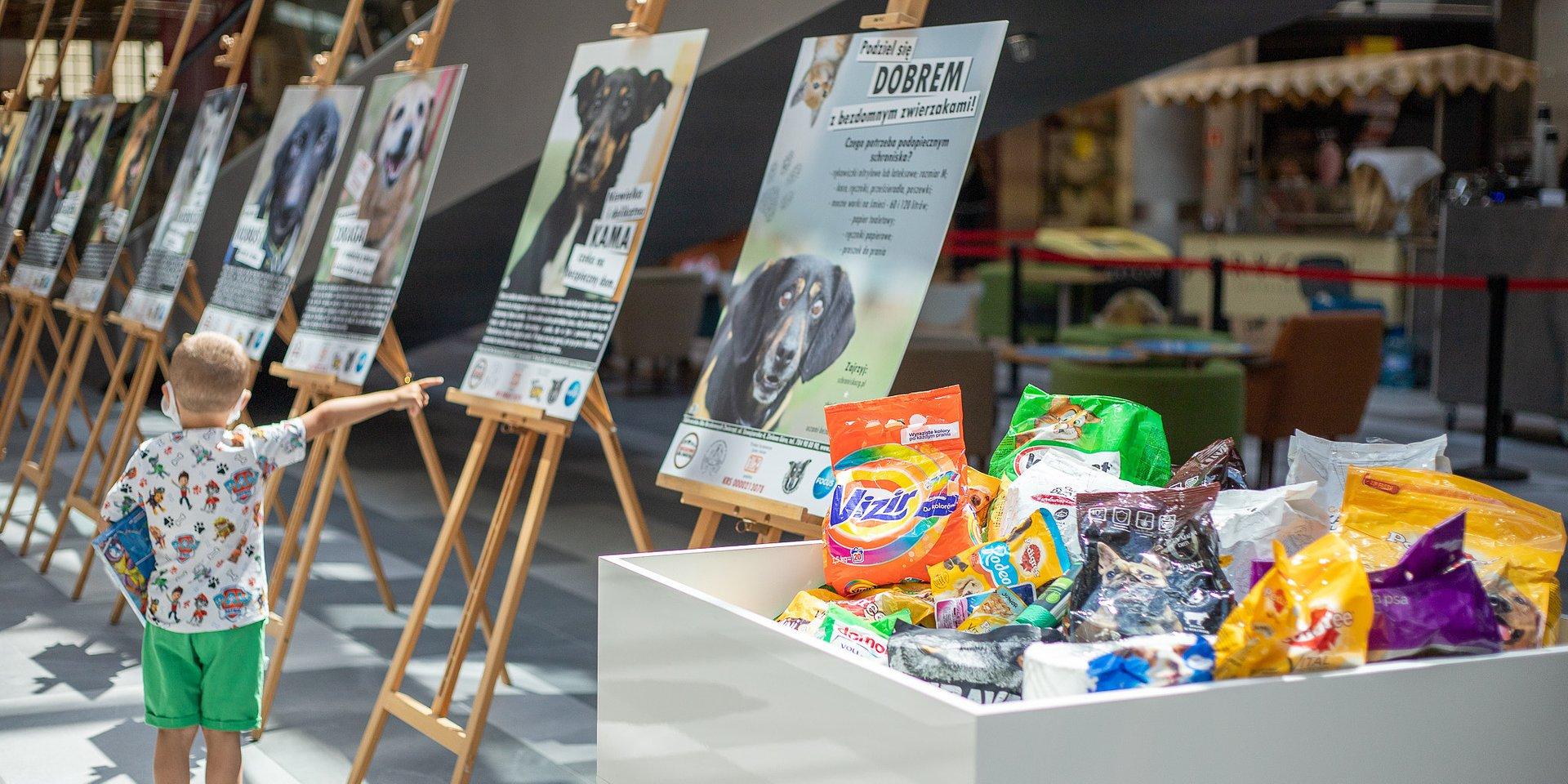 Pół tony karmy dla bezdomnych zwierzaków od klientów Focus Mall