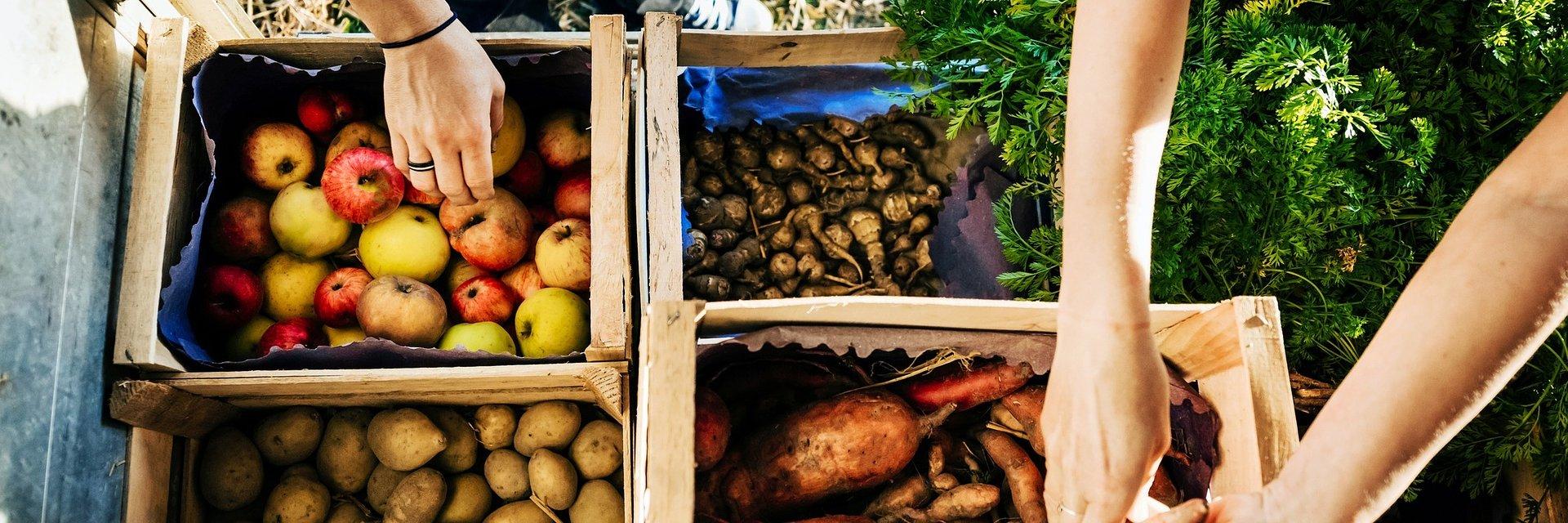 BGK rozszerza wsparcie dla rolników i przetwórców – zmiany w Funduszu Gwarancji Rolnych
