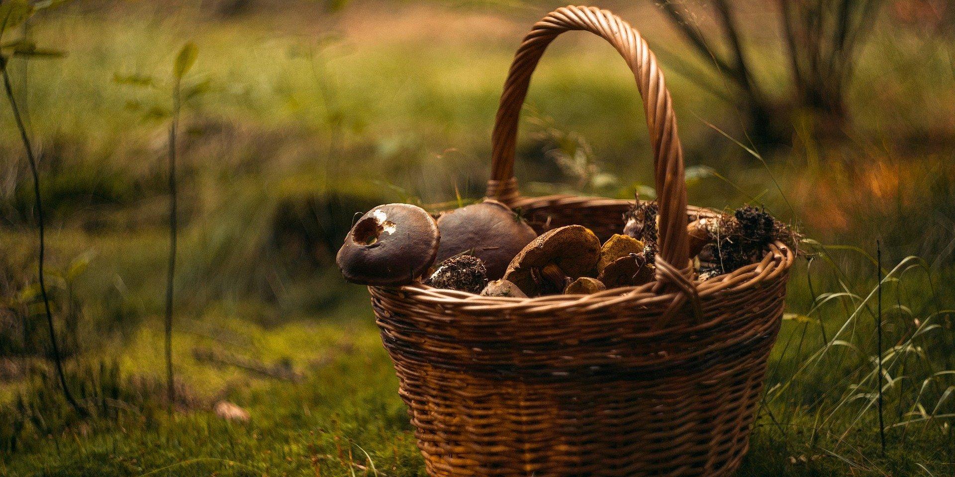 Jak postępować w przypadku podejrzenia zatrucia grzybami leśnymi?