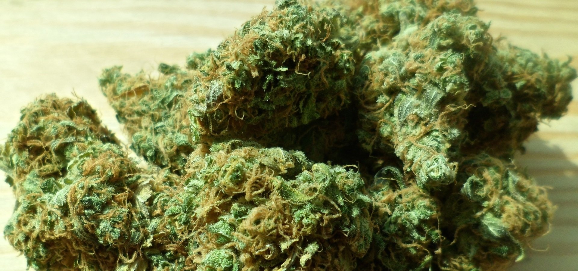 Nie będzie państwowej plantacji marihuany