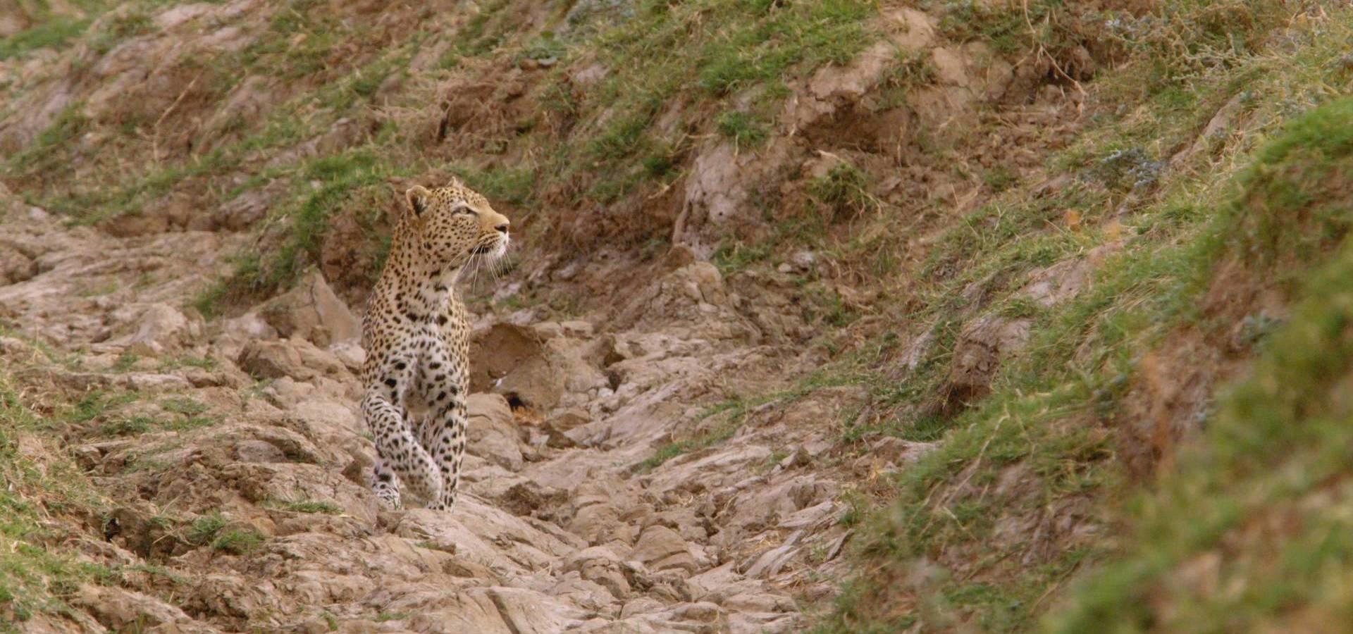 """""""Najwięksi myśliwi Afryki"""" w lutym zapolują  na kanale Nat Geo Wild"""