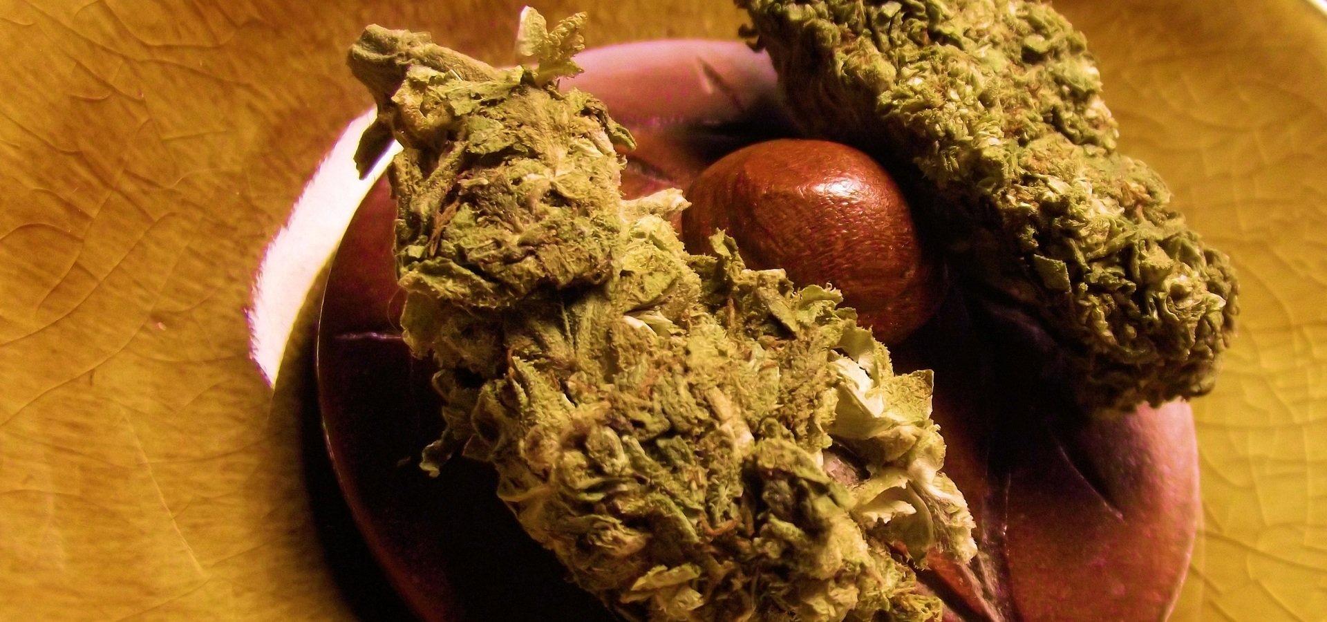 """Będzie porozumienie w sprawie legalizacji """"medycznej marihuany""""?"""
