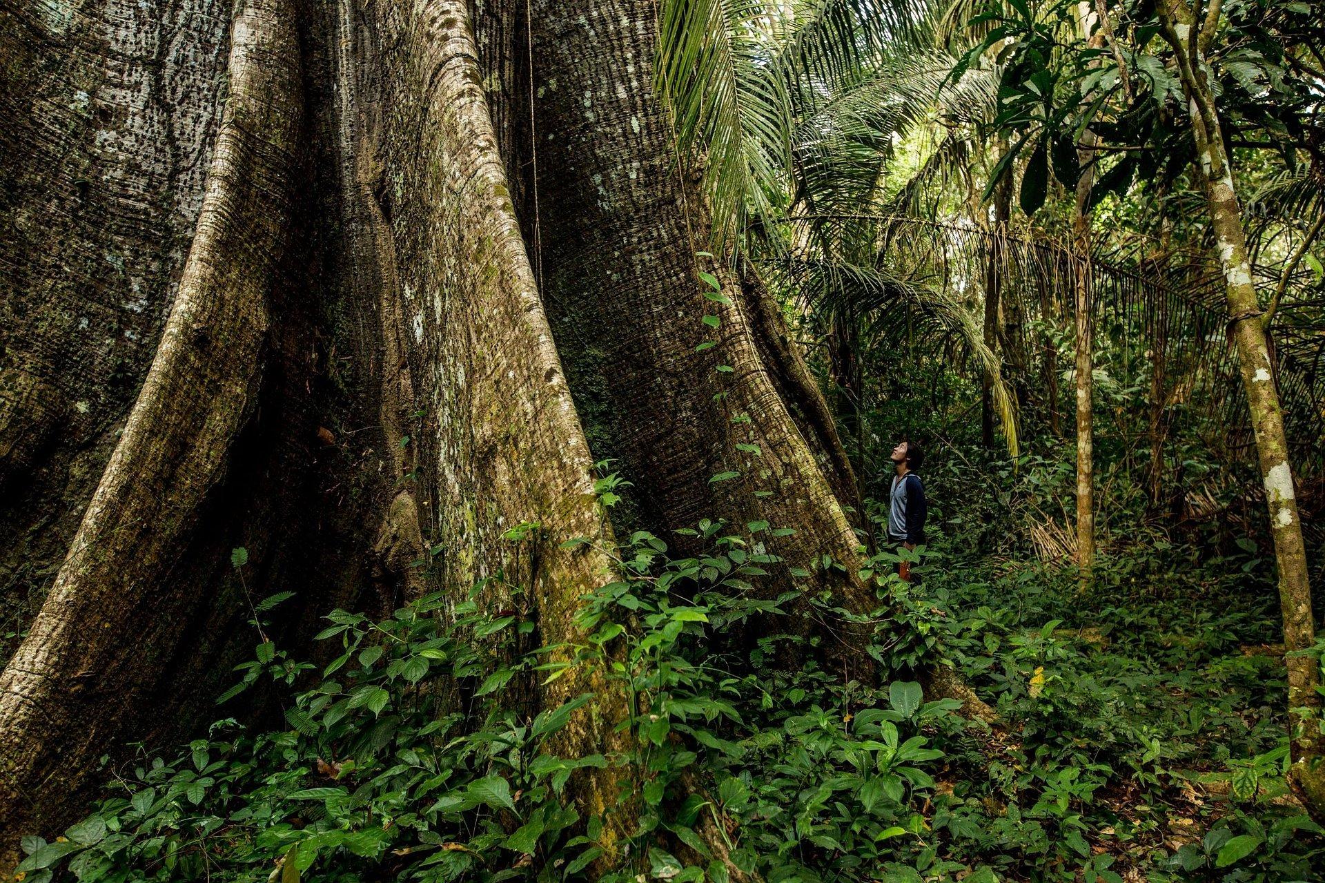 """Kingfisher został członkiem-założycielem inicjatywy """"Forest Allies"""" w ramach organizacji Rainforest Alliance"""