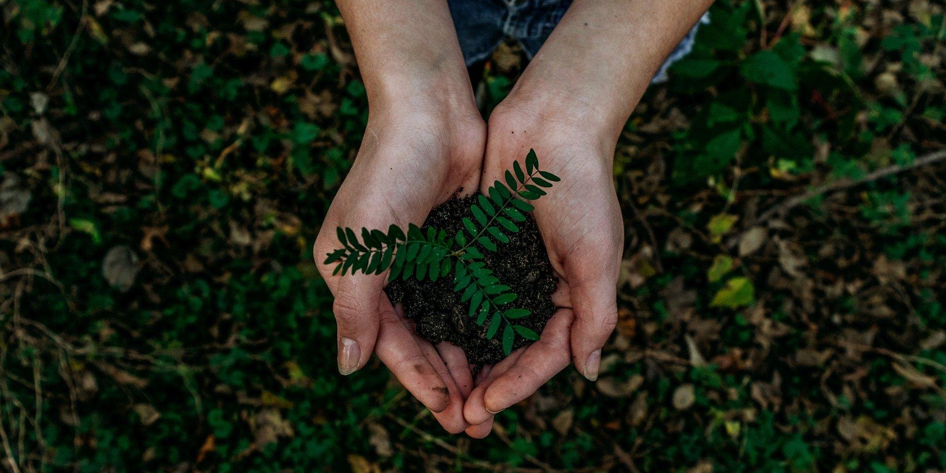 Jak zadbać o środowisko w 2021 roku? Oto 5 dobrych nawyków, które warto wprowadzić w nowym roku