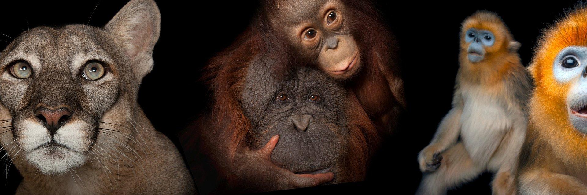 Photo Ark 2 - z miłości do zwierząt. Niezwykłe portrety zagrożonych gatunków.