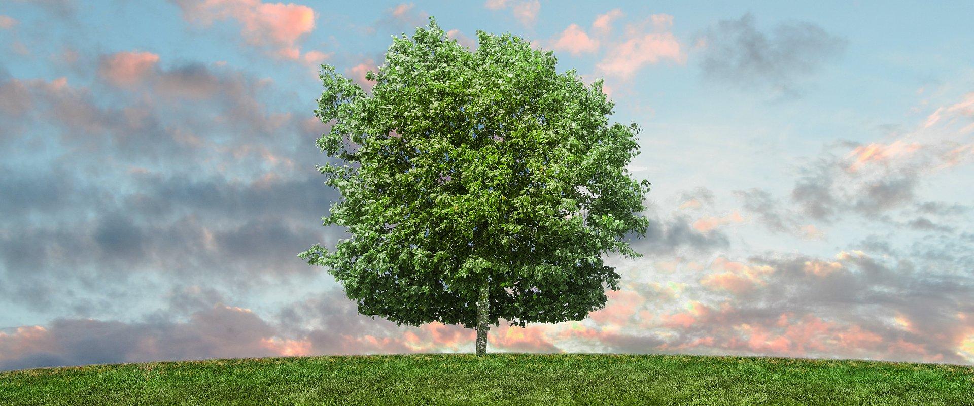 Pro-eko i praca. Polacy o wpływie ekologii na rekrutację