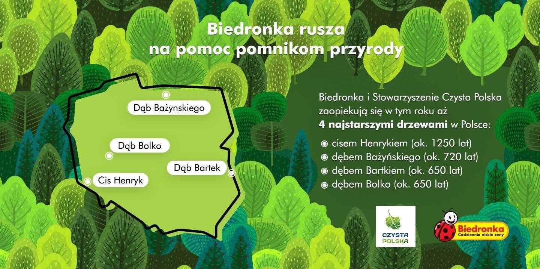 Biedronka bierze pod swoje skrzydła najstarsze drzewa w Polsce