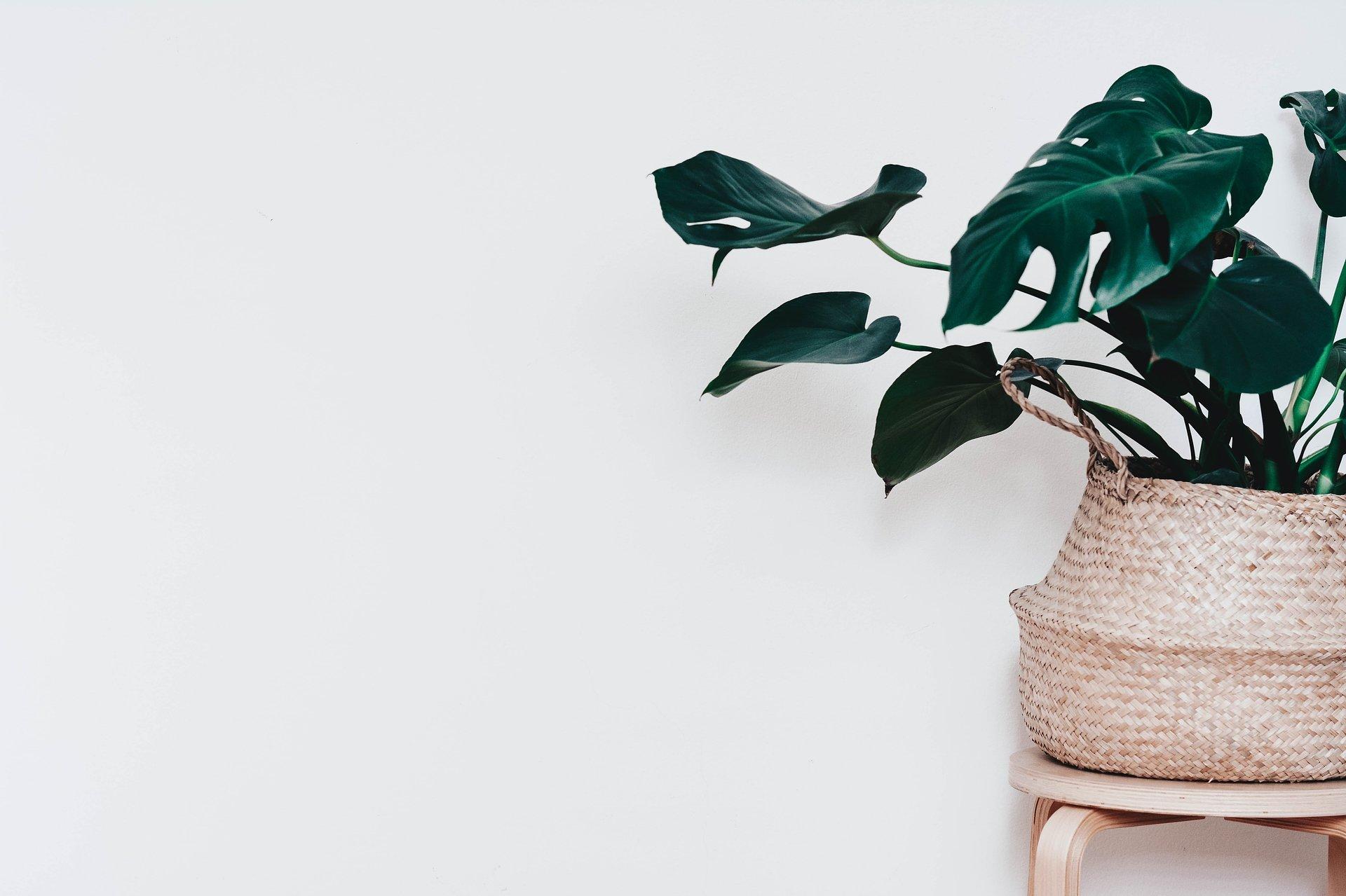 Playlists für die Lieblingspflanzen: Spotify Daten zeigen weltweiten Trend