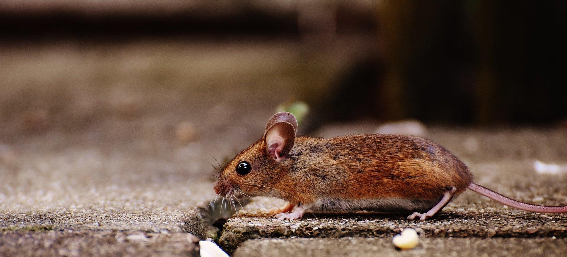 Koniec zabawy w kotka i myszkę