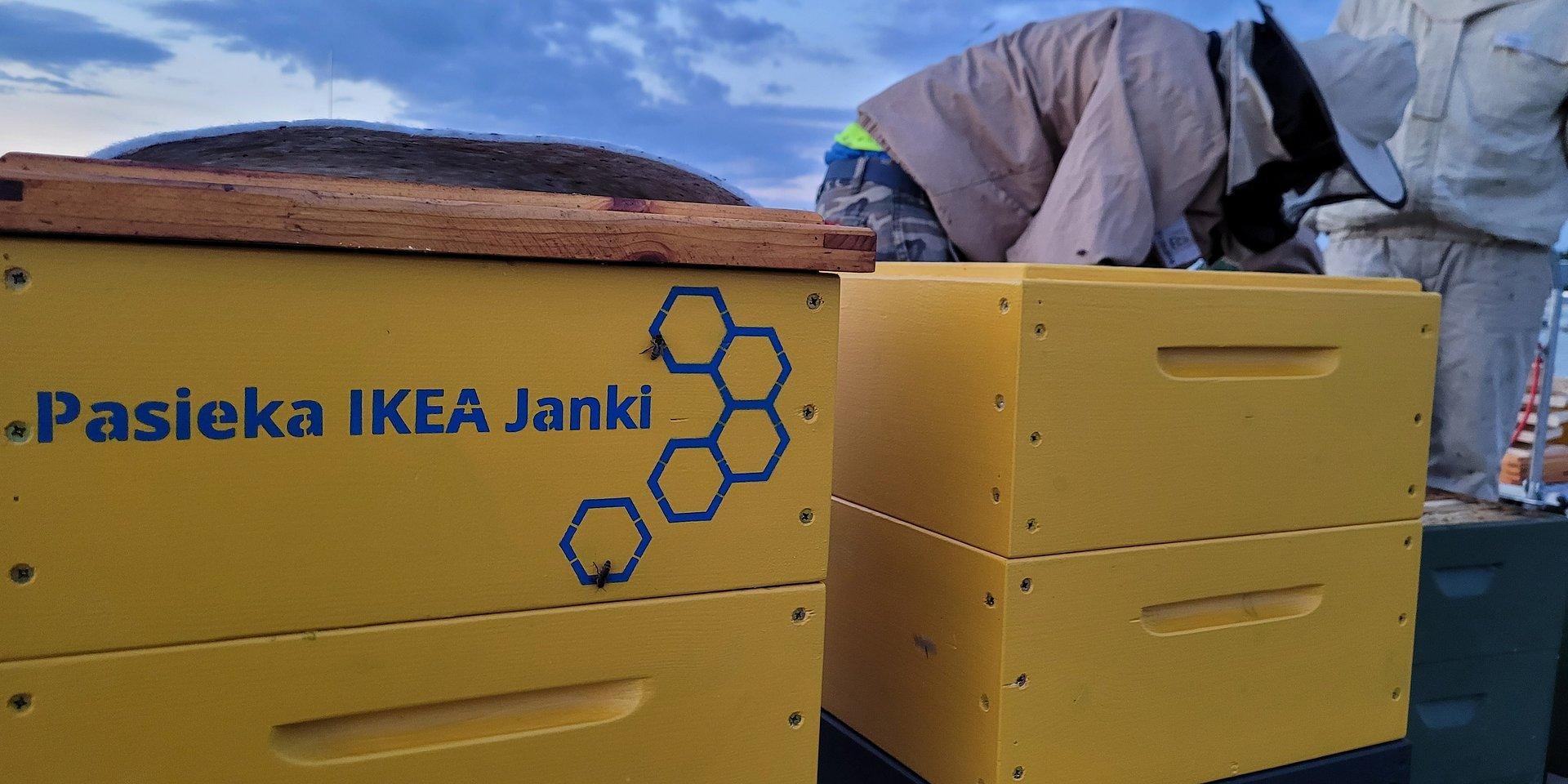 IKEA Janki ma nowych lokatorów – na dachu sklepu zamieszkają pszczoły!