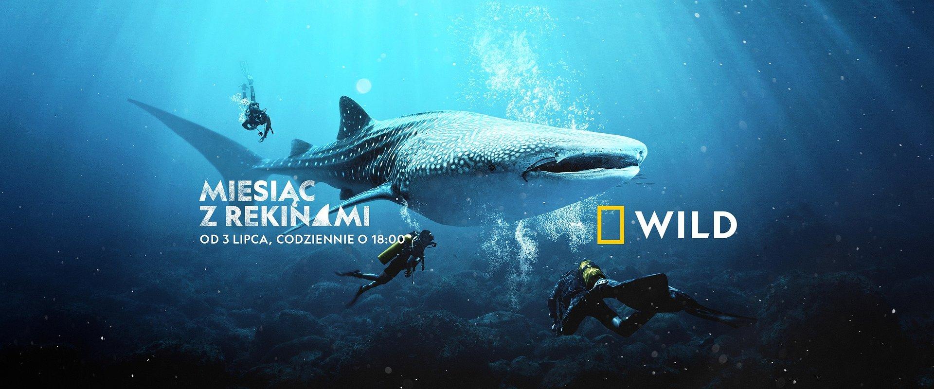 """Płetwa w płetwę z władcami oceanów w National Geographic Wild! Rusza 9. edycja """"Miesiąca z rekinami""""."""