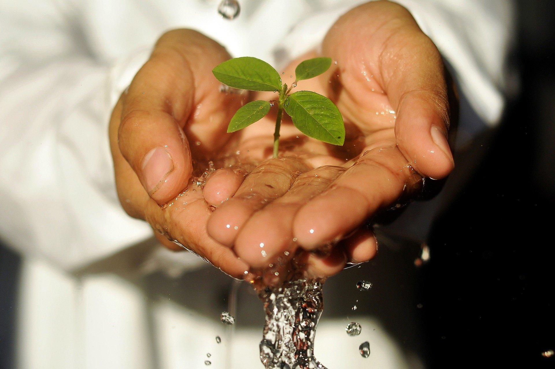 Castorama pomaga oszczędzać wodę