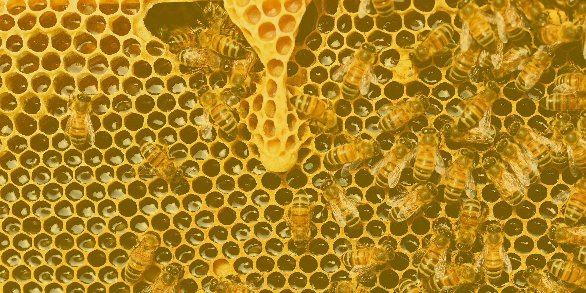 Private Client Groups - the bee's knees in the world of IT security