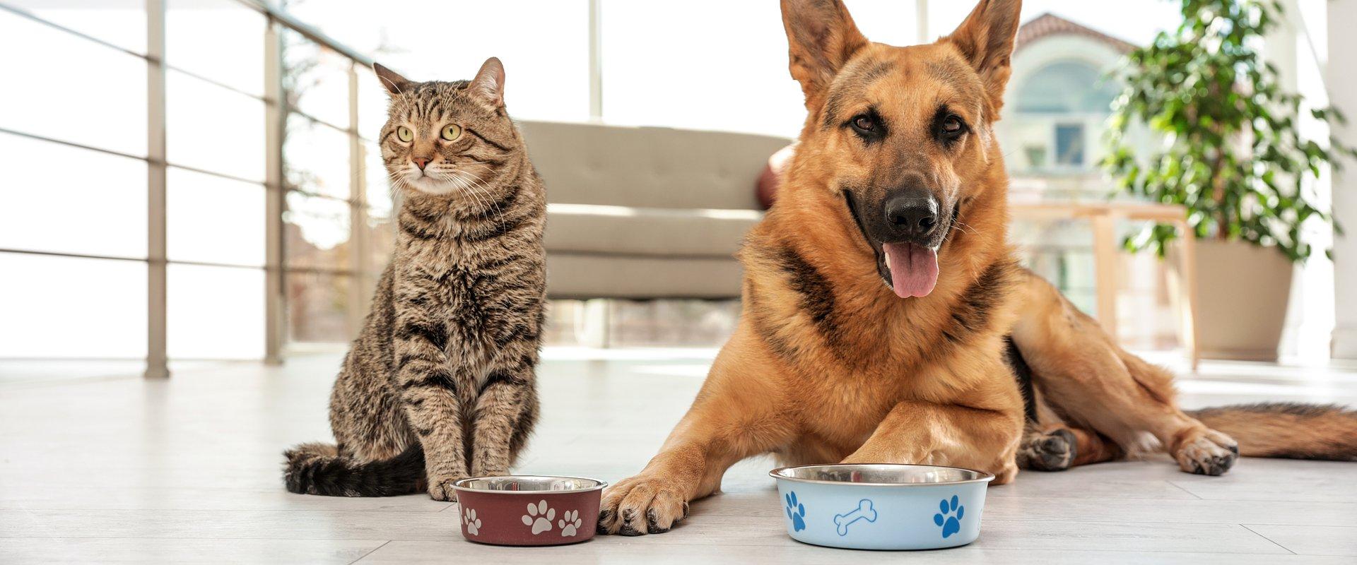 10 Pet Food Brands in Bulk Online