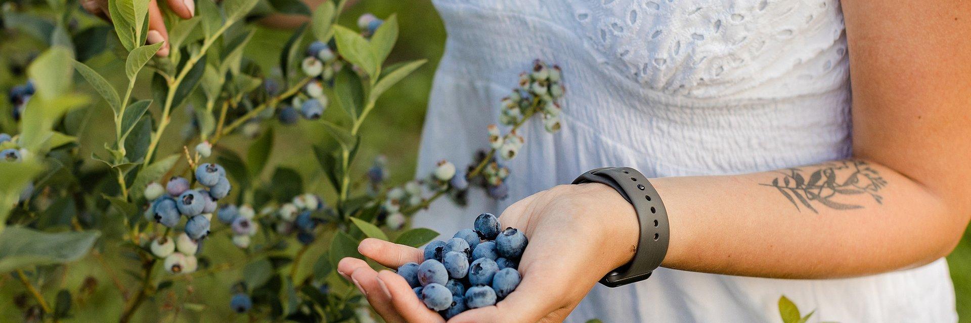 Borówki ulubionym owocem dietetyków. Dlaczego?