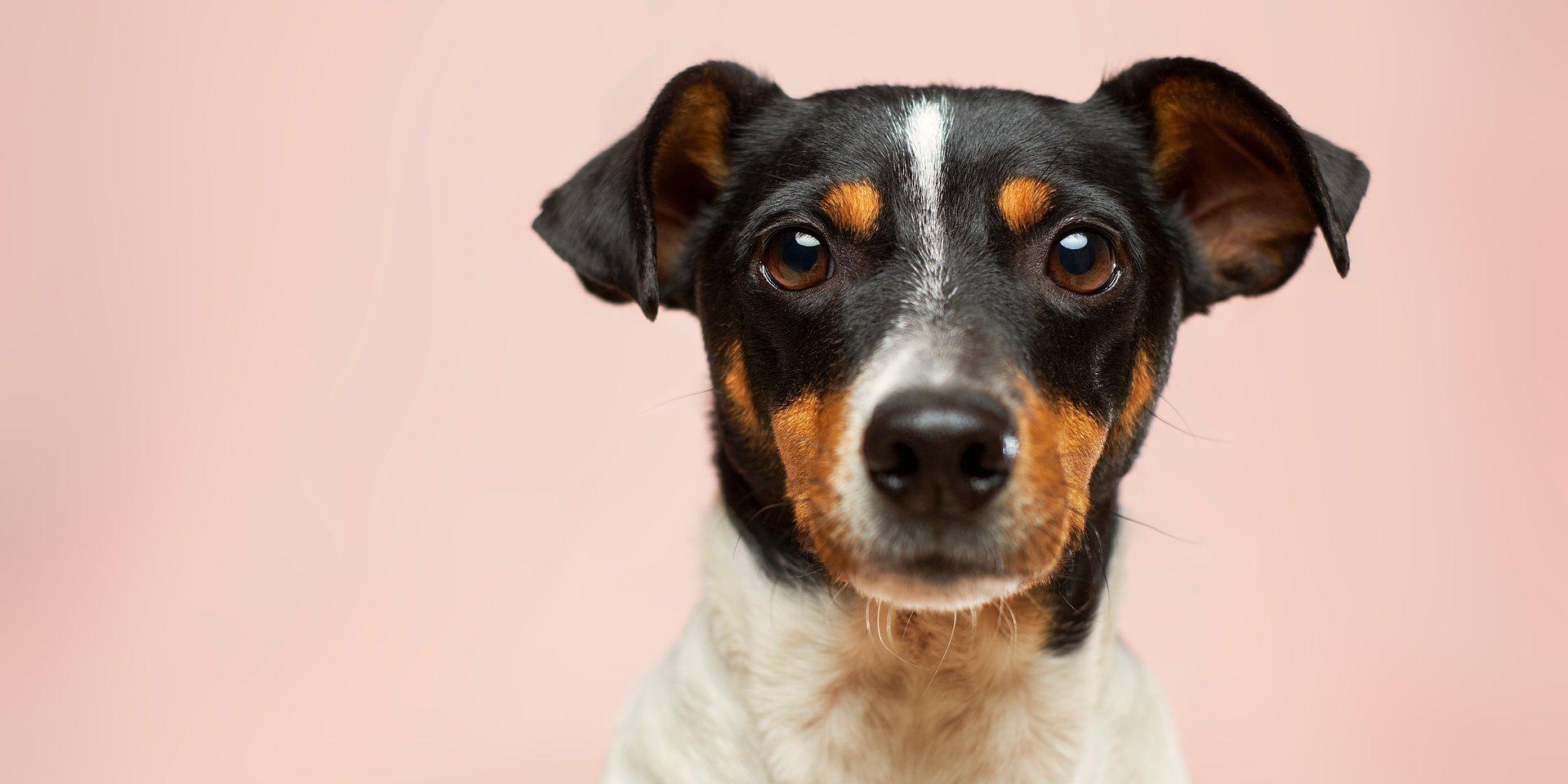 Od disco dla dobermanów po ballady dla bigli - Spotify z okazji Międzynarodowego Dnia Psa dokopuje się do tego, co dla psich uszu jest muzyką