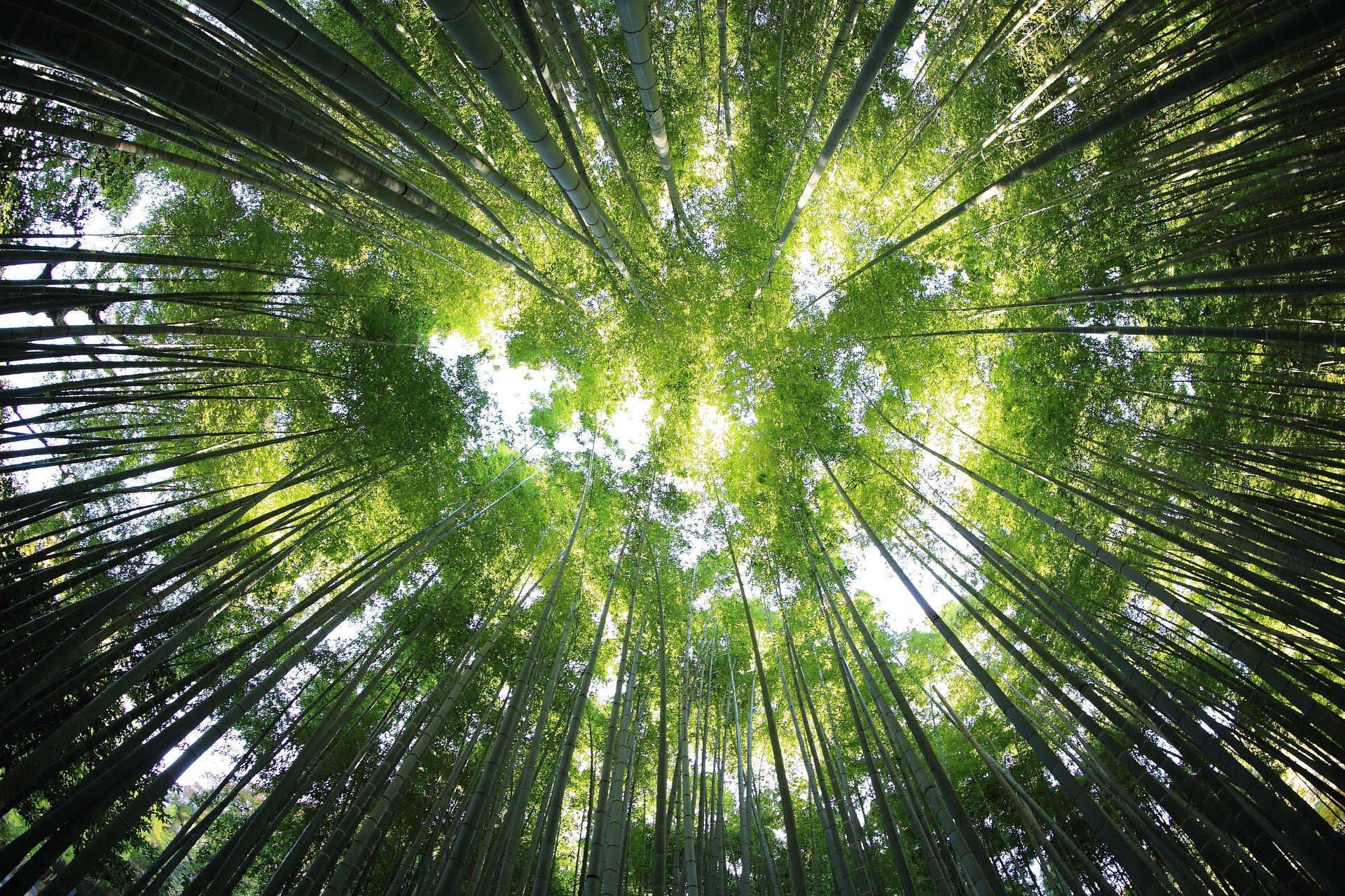 Castorama promuje odpowiedzialną gospodarkę leśną, biorąc udział w kolejnym Piątku FSC