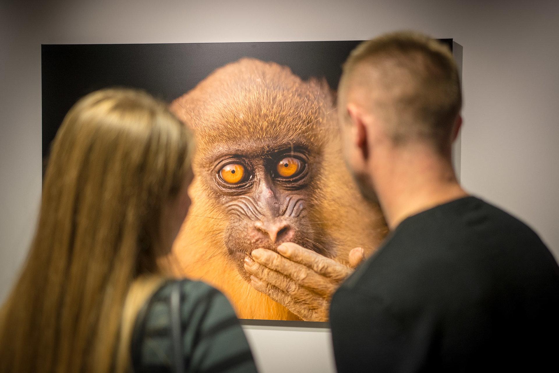 """Ginące gatunki zwierząt poruszyły serca. Ponad 14 tysięcy osób zobaczyło w Warszawie """"National Geographic Photo Ark. Największą wystawę zagrożonych gatunków"""". Teraz wystawa jedzie do Poznania."""