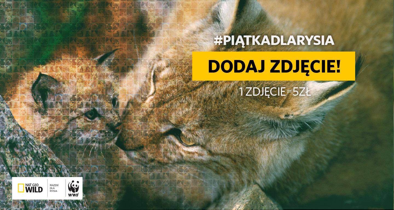 """Ratujemy polskie drapieżne koty. Rusza druga edycja akcji #PiątkaDlaRysia organizowanej przez Nat Geo Wild z WWF Polska. Akcja towarzyszy cyklicznemu wydarzeniu, jakim jest """"Miesiąc z wielkimi kotami"""" na kanale Nat Geo Wild."""