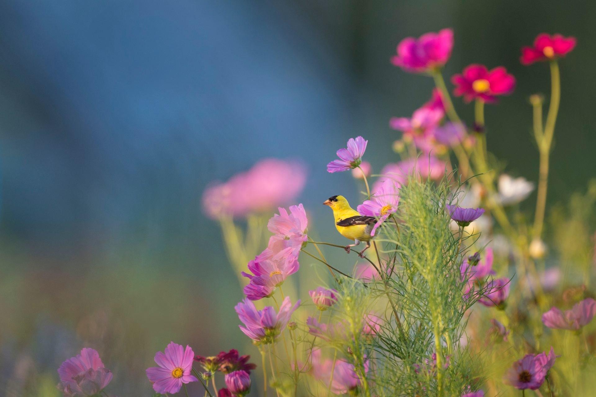 Allergie e mal di stagione: cinque regole per sopravvivere all'arrivo della primavera