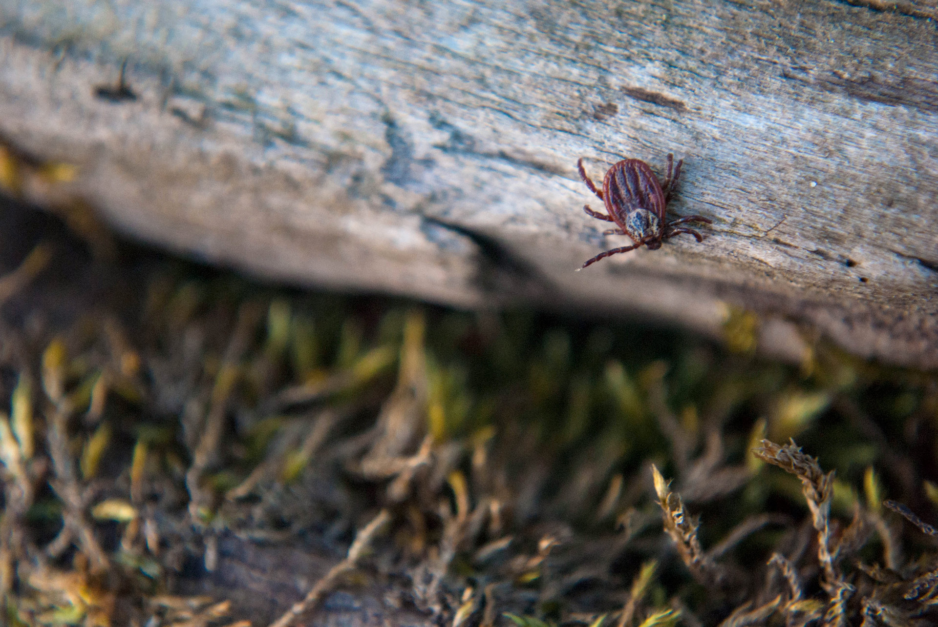Planning a May weekend? Watch out for ticks