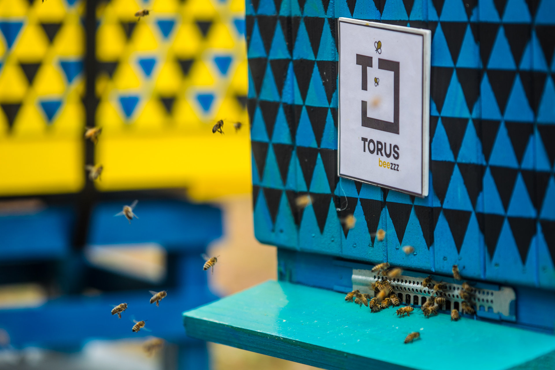 Co robią pszczoły w ALCHEMII?<br>