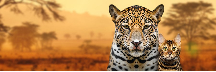"""National Geographic Wild w ramach """"Miesiąca z wielkimi kotami"""" pomaga też małym kotom w potrzebie"""