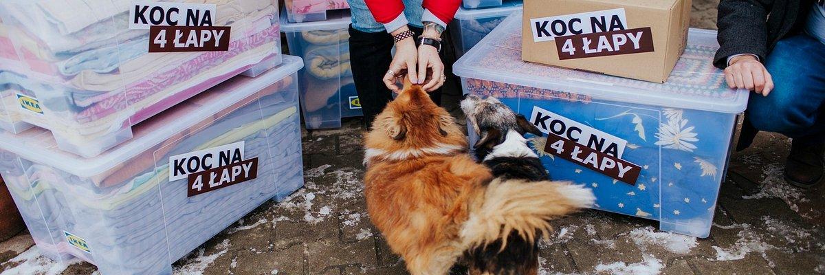 """IKEA Poznań pomaga zwierzętom ze schroniska w Gaju. Podsumowanie akcji """"Koc na 4 łapy""""."""